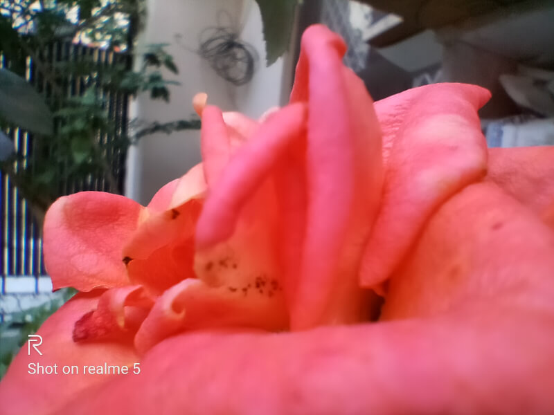 Realme 5 Macro Lens